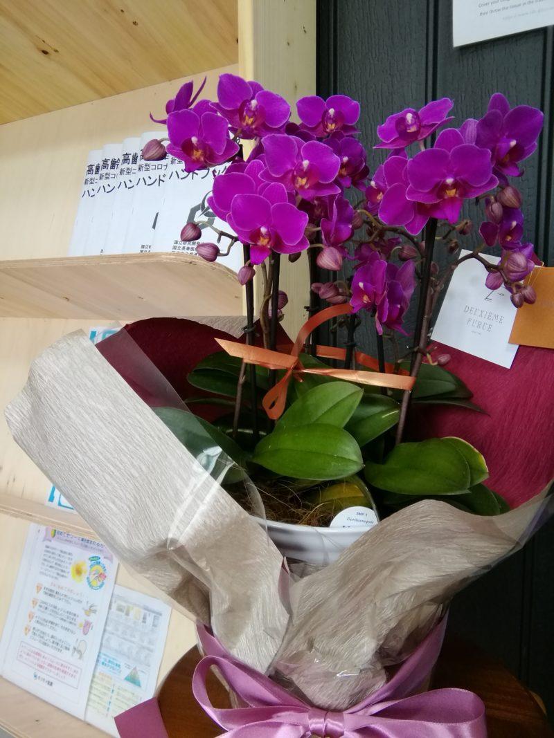 お花をいただきました(^^)